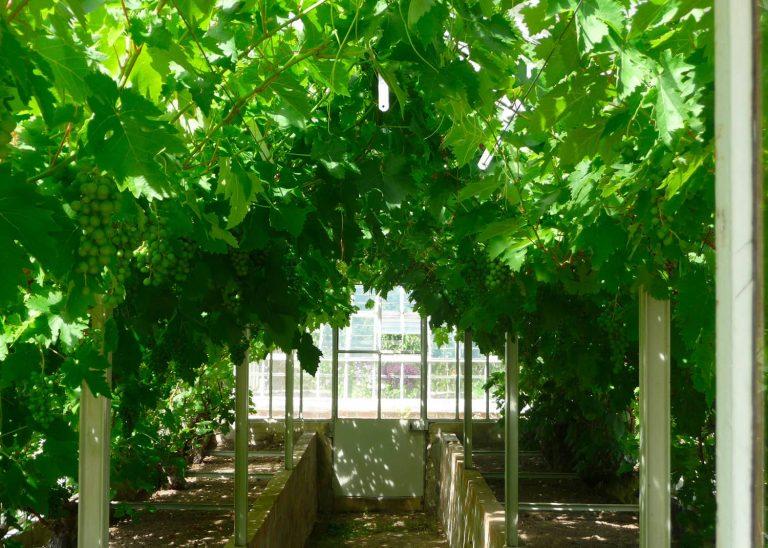 Les serres à raisin du château de Saint-Jean de Beauregard