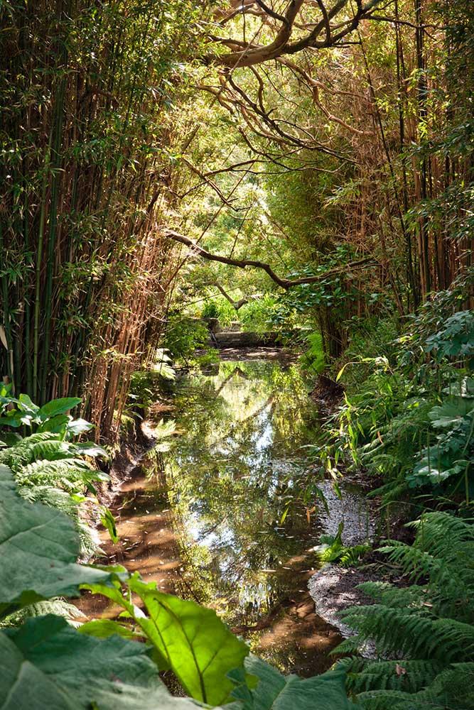 La collection botanique du jardin botanique de Vauville